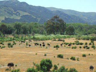 Sideways - ostrich fields